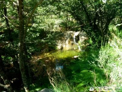 Tejos Valhondillo, Barondillo; fedme;club de montaña en madrid;rutas senderismo;que ver en madrid